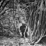 American Soldier on Patrol Creeping Through Dense Jungle During Campaign to Take Back New Guinea Photographic Print by George Strock