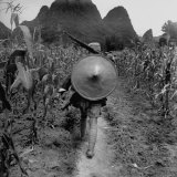 Member of the Chinese Nationalist Army on Patrol in a Cornfield Photographie par Jack Wilkes