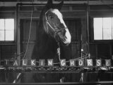 Lady Wonder, a Clairvoyant Talking Horse, Can Count and Spell Its Name Premium Photographic Print by Hank Walker