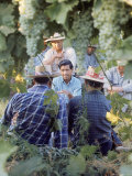Labor Activist Cesar Chavez Talking in Field with Grape Pickers of United Farm Workers Union プレミアム写真プリント : アーサー・シャッツ