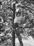Eartha Kitt Playing in the Tree Reprodukcja zdjęcia premium autor Gordon Parks