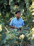 United Farm Workers Leader Cesar Chavez Standing in a Vineyard During the Grape Pickers' Strike Premium Photographic Print by Arthur Schatz