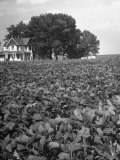 Farm House Surrounded by Field of Crops Premium Photographic Print by Andreas Feininger