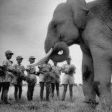Elephant Which Is a Mascot of the Boy Battalion in Taiwan Photographic Print by Howard Sochurek
