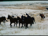 Wild Mustang Horses Running Across Field in Wyoming and Montana Premium Photographic Print by Bill Eppridge
