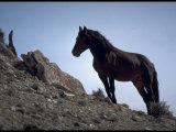 Wild Mustang Horses Running Across Field in Wyoming and Montana Photographic Print by Bill Eppridge