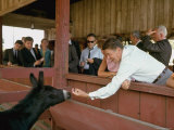 California Governor Candidate Ronald Reagan Petting Donkey, While on the Campaign Trail Premium Photographic Print by Bill Ray