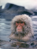 Japanese Macaque, Snow Monkey Sitting in Waters of Hot Spring in Shiga Mountains During a Snowfall Photographic Print by Co Rentmeester