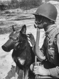Soldier and German Shepard Wearing Gas Masks for Chemical Warfare Maneuvers Premium Photographic Print by Andreas Feininger
