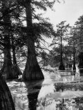 Reelfoot Lake, Tennessee, Showing Stagnant Lake Waters Reproduction photographique sur papier de qualité par Andreas Feininger