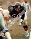Mike Singletary Foto