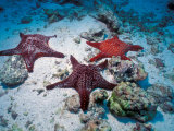 Sea Stars, Hood Island, Galapagos Islands, Ecuador Photographic Print by Jack Stein Grove