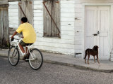 Boy Riding Bike in Front of House, with Stray Dog, Belize City, Belize Lmina fotogrfica por Anthony Plummer