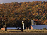 Fall Colors and a Field of Dried Soybeans in Pleasant Gap, Pennsylvania, October 20, 2006 Photographic Print by Carolyn Kaster