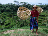 Rice Farmer with Baskets, Ubud, Indonesia Photographic Print by Michael Coyne