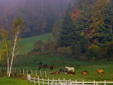 Horses in Field, Near Grandville, Vermont, USA Photographic Print by Joe Restuccia III