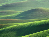 Wheat Springs in the Hills of the Palouse Country, Idaho, USA Photographic Print by Chuck Haney