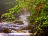 Flowing Streams Along the Appalachian Trail, East Arlington, Vermont, USA Fotografisk trykk av Joe Restuccia III