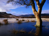 Tree Standing in Frozen Pond with Monadhliath Mountains in Background, Kingussie, United Kingdom Photographic Print by Andrew Parkinson