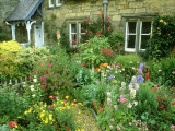 Cottage Garden With, Colourful Flower Beds Direlton, Scotland, UK Fotografie-Druck von Mark Hamblin