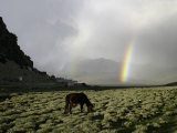 Horse with Rainbow, Tibet Photographic Print by Michael Brown