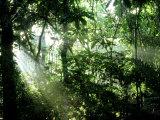 Tropical Rainforest, Panama Reprodukcja zdjęcia autor John Brown