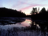 Dusk, Algonquin Provincial Park, Canada Photographic Print by David Cayless