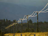 Power Lines by Road Side Reflecting Evening Light, New Zealand Photographic Print by Tobias Bernhard