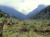 Path Across Upper Bigo Bog Towards Maln Mts, Rwenzori Mountains, Uganda Fotografisk tryk af Michael Brown