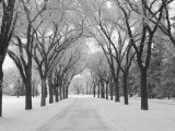 Winnipeg Manitoba, Canada Winter Scenes Photographic Print by Keith Levit