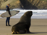 Surfer Standing Near Sea Lion on Beach, the Catlins, Porpoise Bay, New Zealand Stampa fotografica di Christian Aslund