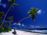 Bent Palm Tree on Beach, French Polynesia Photographic Print by John Borthwick