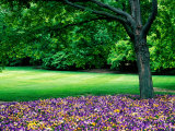 Garden at Cantigny Estate, Winfield, United States of America Photographic Print by Richard Cummins
