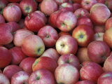 Freshly Picked Gala Apples, Monitor, Washington, USA Photographic Print by Jamie & Judy Wild