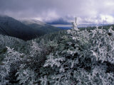 Snow Coats the Boreal Forest on Mt. Lafayette, White Mountains, New Hampshire, USA Fotografie-Druck von Jerry & Marcy Monkman