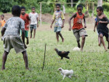 Chickens Run to Avoid a Soccer Game Played by Children from Lolovoli Village on the Island of Ambae Photographic Print