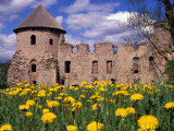 Dandelions Surround Cesis Castle, Latvia Photographic Print by Janis Miglavs