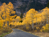 Aspen Trees on the Slopes of Mt. Timpanogos, Wasatch-Cache National Forest, Utah, USA Photographic Print by Scott T. Smith