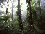 Monteverde Cloud Forest, Costa Rica Photographic Print by Stuart Westmoreland