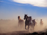 Wild Horses in the High Desert near Sun River, Oregon, USA Photographic Print by Janis Miglavs