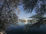 Cherry Blossoms Line the Tidal Basin Photographic Print