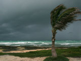 Dark Clouds Gather and a Palm Tree Blows Photographic Print