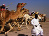 Official Starter Runs Away From Camels at Start of Race at Kuwait Camel Racing Club, Kuwait Photographic Print by Mark Daffey