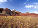 Painted Hills with Bee Plant, Painted Hills National Monument, Oregon, USA Photographic Print by Terry Eggers