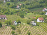 Vineyard View from Calvary Hill, Southern Transdanubia, Hungary Photographic Print by Walter Bibikow