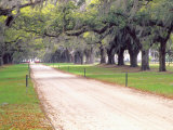 Entryway Lined with Live Oaks and Spanish Moss, Boone Hall Plantation, South Carolina, USA Photographic Print by Julie Eggers