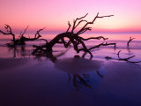 Tree Graveyard on Beach at Dusk, Jekyll Island, Georgia, USA Photographic Print by Joanne Wells