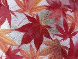 Darrell Gulin - Japanese Maple Leaves Frozen in Water, Sammamish, Washington, USA - Fotografik Baskı