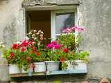 Window in Old Town, Istria, Croatia Photographic Print by Russell Young