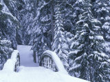 Snow-Covered Bridge and Fir Trees, Washington, USA Photographic Print by John & Lisa Merrill